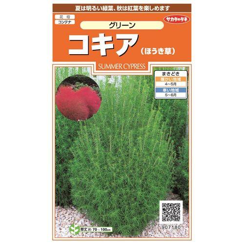 サカタのタネ コキア グリーンほうき草
